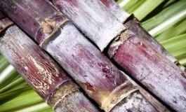 Rhum agricole et industriel: de jus de canne à sucre et de mélasse
